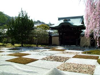 竜馬伝と桜